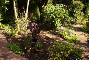 Cleared Cordyline bed