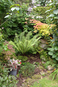 View Fern bed August 2015